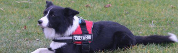 Regional-Feuerwehrverband Vorderpfalz zufrieden mit 1. Rettungshundesymposium